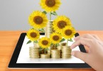 Sunflower and coins Money growth concept, Investments in stock market